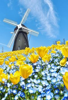 Wallpaper Nature Flowers, Beautiful Nature Wallpaper, Flowers Nature, Beautiful Landscapes, Beautiful Flowers, Landscape Photography, Nature Photography, Old Windmills, Le Moulin