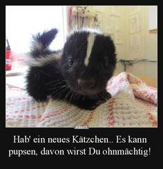 Hab' ein neues Kätzchen.. | Lustige Bilder, Sprüche, Witze, echt lustig