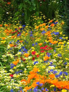 My secret garden Flora Flowers, Tropical Flowers, Beautiful Flowers, Wild Flower Meadow, Wild Flowers, The Secret Garden, Nature Collage, Spring Aesthetic, Blue Garden