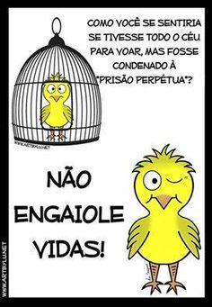 """""""O GRITO DO BICHO"""": Pensamento do dia: Não engaiole vidas!  #ogritodobicho#falabicho"""