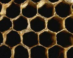 honeycomb (Fibonacci)