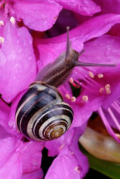 Snail. I was very happy when I saw my first one at 12 years old. As an adult I save them, but don't appreciate them eating my plants... naughty little snails!