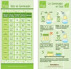 Instrucciones-germinación Growing Sprouts, Green Life, Diy Food, Plant Based, Dental, Vegan Recipes, Health Fitness, Nutrition, How To Plan