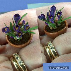 1:12 krokus 💙 Succulents, Plants, Succulent Plants, Plant, Planets