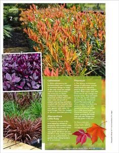Autumn colour. Clipped from Better Homes and Gardens using Netpage.