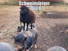 Schweinsteiger ist wieder fit...