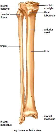 Anatomy Of Ulna Bone 6 Best Images Of Ulna Blank Diagram Radius And ...