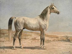 Otto Eerelman - Arabian Horse.