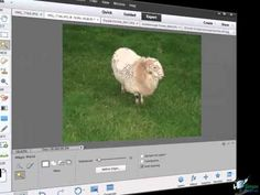 ▶ Photoshop Elements 12 Tutorial - How to Use the Magic Wand Tool in Photoshop Elements 12 - YouTube Photoshop Video, Photoshop Tutorial, Photoshop Help, Photoshop Actions, Photoshop Elements Tutorials, Adobe Photoshop Elements, Shutter Speed Photography, Photoshop Photography, Camera Techniques