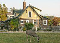 Bear's Den Jasper Alberta Canada accommodations