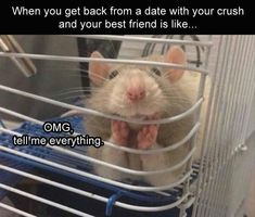 Funny pictures about And people say rats can't be cute. Oh, and cool pics about And people say rats can't be cute. Also, And people say rats can't be cute. Memes Lol, Funny Memes, Videos Funny, Funny Best Friend Memes, Funny Crush Memes, Funniest Memes, Viral Videos, Rats Mignon, Cute Rats