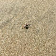 #beach #ecuador #ayampe #nature #crab #small #sand