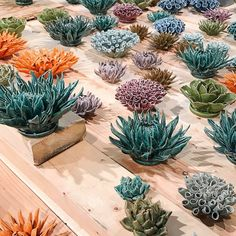 """I once had a green thumb but it has since gone black because I don't have a whole lot of time anymore. I've relied mainly on succulents then air plants. When your air plants start to shrivel you know it's time to move on to ceramic plants because I just don't do """"fake"""" unless it's REALLY fake."""