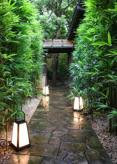 bamboo path lit with oversized and very modern lantern cleverlife