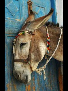 I love donkeys?