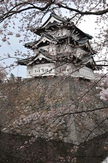 Misawa, Japan: Cherry Blossom Festival. This is where I was born.. It's beautiful