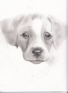 Pencil Drawing Puppy Portrait by StyllLifes on Etsy