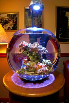 Amazing marine fishbowl /Biorb containg azooanthellae corals ( corals that get their nutrition from food as opposed to light).