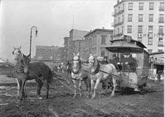 PORTRAIT OF AN UNHEALTHY CITY: NEW YORK IN THE 1800S - CARRIAGE HORSE History - Coalition for New York City Animals
