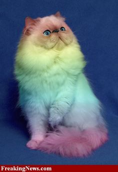 Funny Cat Grooming | Funny Cats Pictures - Strange Pics - Freaking News