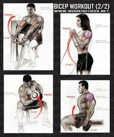 Bicep Workout Part 2 - Healthy Fitness Exercises Gym Low Tricep - Yeah We Train !
