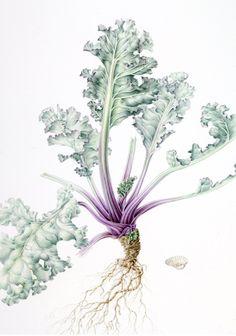 Annie Patterson - Watercolour inspiration