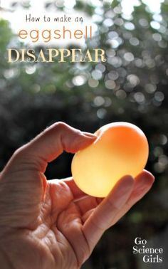 How to make an eggshell disappear - fun science experiment for kids