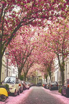 London in blossom.