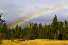 What a great name for this place. This photo was taken up Gold Creek east and north of Missoula, Montana USA. The meadow is gold and I am pretty sure there are pots of gold at both ends of this rainbow. Gold Creek is to the left just yards from this meadow and the photo is looking north east. What a dynamic day in October 2011. / Our trip into the woods was with a group of six new photographers including a young exchange student from Japan. Needless to say the student was in awe of the open b...