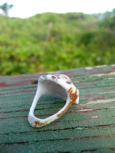 Hawaiian Handcarved, size 7, cone snail shell ring. Handcarved by me in Kailua, Oahu, Hawaii :)