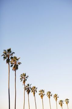 palm trees are the ultimate summer tree
