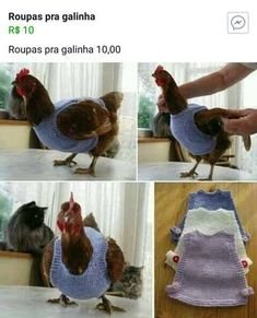 Here is a fun knit project – Knit Chicken Jumper Sweater for your hens. It is born due to the wild hen/bird rescue to keep those bald hens warm in… Free Chickens, Keeping Chickens, Raising Chickens, Chickens Backyard, Building A Chicken Coop, Diy Chicken Coop, Chicken Chick, Chicken Runs, Chicken Clothes