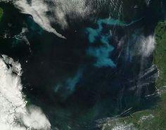 Algae blooms as seen from space
