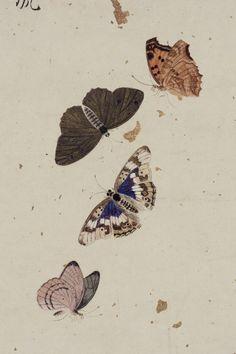 꽃과 나비 | 소장품 검색:국립중앙박물관 Butterfly Painting, Butterfly Art, Flower Art, Butterflies, Korean Painting, Chinese Painting, Korean Art, Asian Art, Writing Art