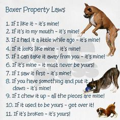 'Boxer Rules' Ha - So true! - To learn more about training this versatile breed of dog (click here) http://dunway.us/kindle/html/boxer.html