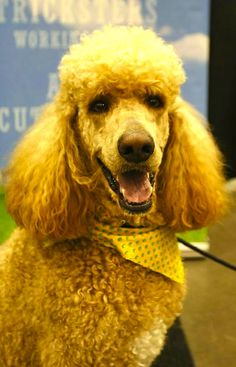 http://talenthounds.ca/news/latest-buzz-news/photo-album-day-2-of-canadian-pet-expo/