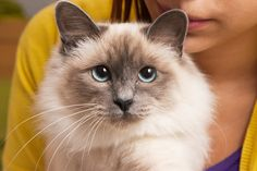 This one's eyes are like an ocean after a storm. | Community Post: 8 Cats That Are Prettier Than Most Humans