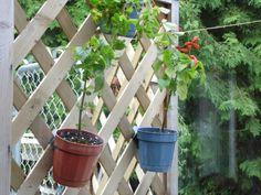 """Brackets on 1/4"""" lattice. Lattice Brackets #lattice bracket, #pot holder http://www.latticebracket.website http://www.potholder.website"""