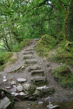 Magpie- Dartmoor. June 2007