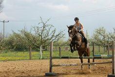 Oldenburg for Sale: Mare, Bay, 9 years in Sömmerda, Thüringen, Germany (Caballo-ID: HA027720) | Caballo Horsemarket
