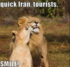 Dump A Day Funny Animal Pictures - 37 Pics Funny Animal Pictures, Funny Images, Funny Animals, Cute Animals, Animal Pics, Wild Animals, Talking Animals, Funny Photos, Bing Images