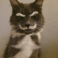 Old man cat wants you off his lawn - Imgur