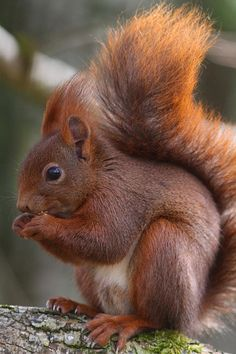 Photograph,Images,video for visual recreation Happy Squirrel, Cute Squirrel, Squirrels, Amazing Animal Pictures, Funny Animal Photos, Wild Animals Photos, Baby Animals Pictures, Nature Animals, Animals And Pets
