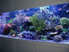 Best tanks from around the world. - Page 3 - Reef Central Online Community