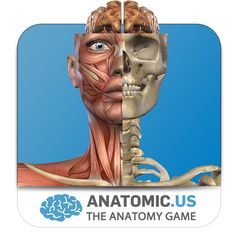 Anatomic.us: The Anatomy Game