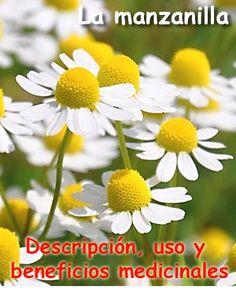 Syngonium - Araceae - Como curar y cultivar las plantas de singonio Begonia, Hoya Plants, Echeveria, Cactus, Exterior, Patio, Potato, Gardening, Rare Succulents