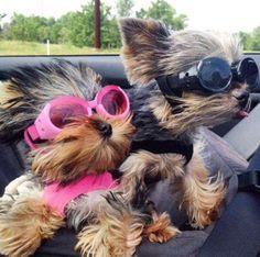 Yeeehaaa, what a ride!!!!