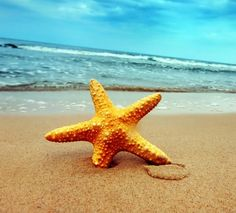 TheStarfishStory-postimg