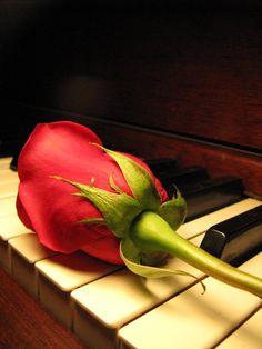 rose bud and piano by Heidi-V-Art