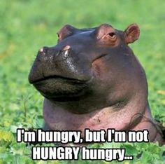 Hungry — but not Hungry Hungry — Hippo